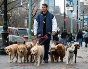Выгул собак и кошек